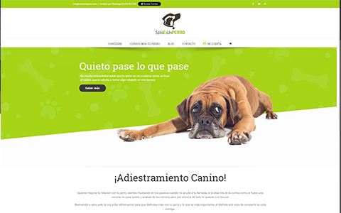 Soloesunperro - Cursos de Adiestramiento